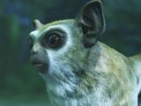 《最终幻想14》高清壁纸系列【可爱动物 二 】