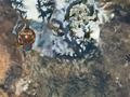 天谕悬空居领地之战实况视频与战术攻略